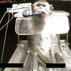 """ניסויים במכון ויצמן צילום: באדיבות """"תנו לחיות לחיות"""" ו""""יומן חייתי"""""""