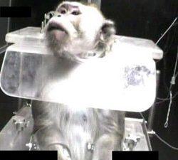 """ניסויי בקופים """"בכפוף להוראות הדין"""". צילום: תנו לחיות לחיות"""